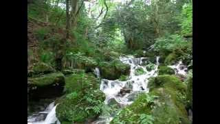 箱根の小涌谷に有る「千条の滝」です。