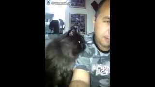 (Смотреть Всем) Демонический кот ласкается !