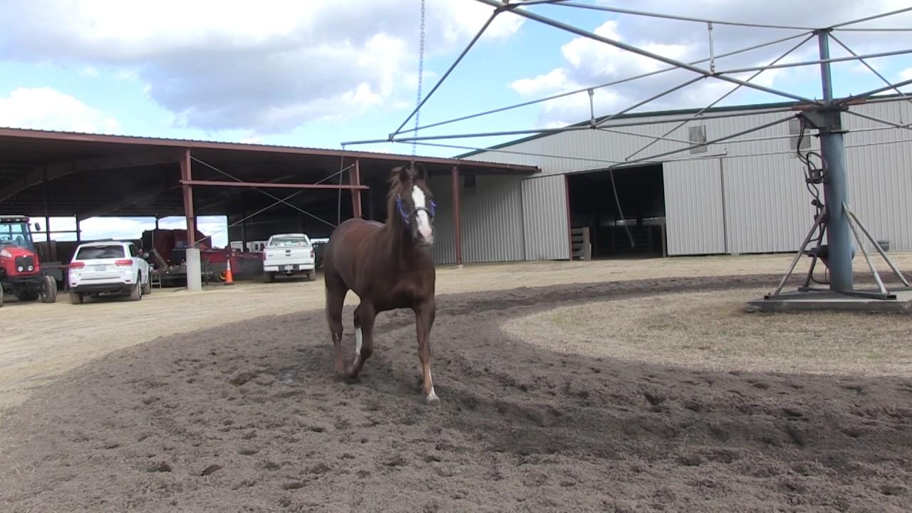 Horse Walker Plans DIY Horses Walking Training Equipment Homemade Mechanical
