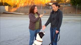 National Train Your Dog Month - Video Winner