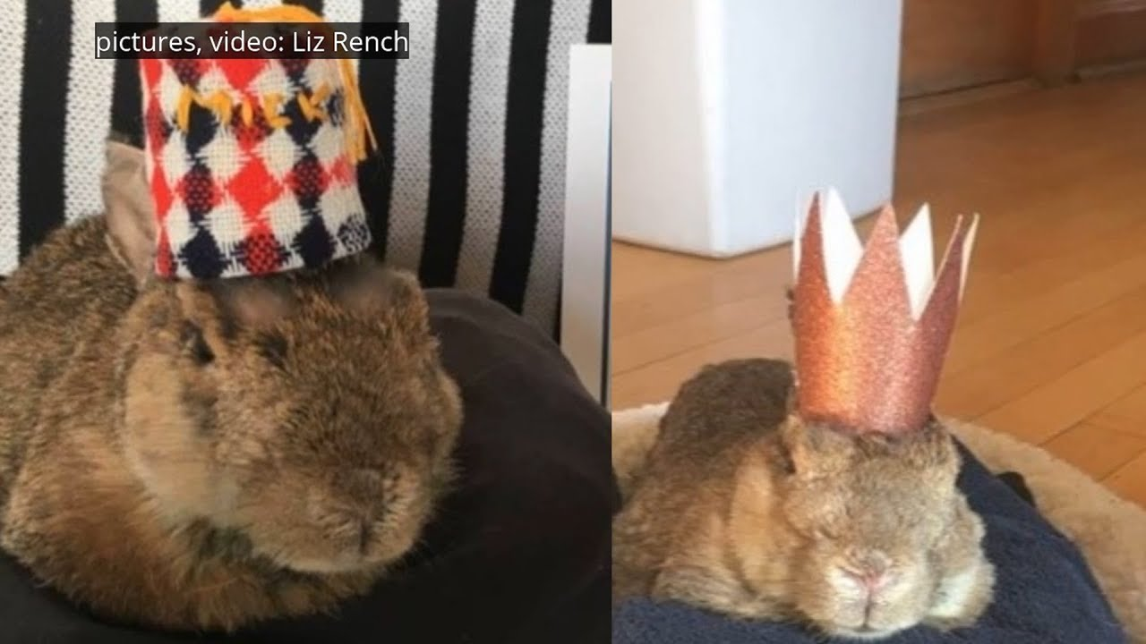 World's Oldest Rabbit Celebrates 16th Birthday