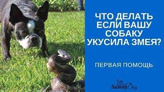 Что делать, если вашу собаку укусила змея? Какая первая помощь?