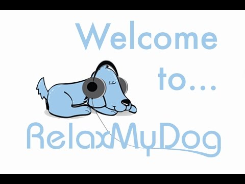 an-introduction-to-relaxmydog!