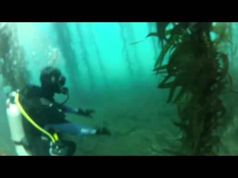 Shaws cove dive