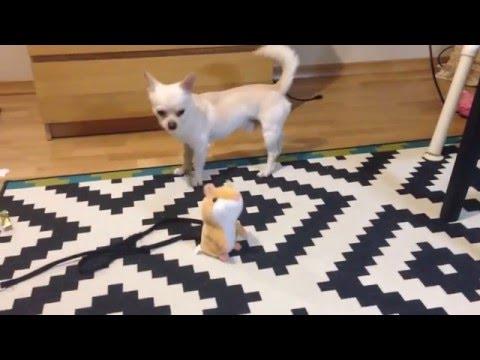 Мега смешное видео Говорящие животные