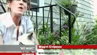 Кот с двумя мордами ( Фрэнк и Луи )