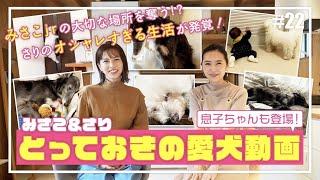 安田美沙子とさりのかわいい愛犬を公開 二人のスマホに入っているペット動画を見てみます。 愛するペットを撮影した動画たち 安田美沙子の愛犬ハンナとララ さりの愛犬 ...