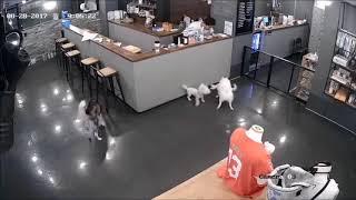 【閲覧注意】犬カフェでハスキー犬に襲われた子犬が…A big dog kills a small dog 子どもを投げつける 検索動画 23