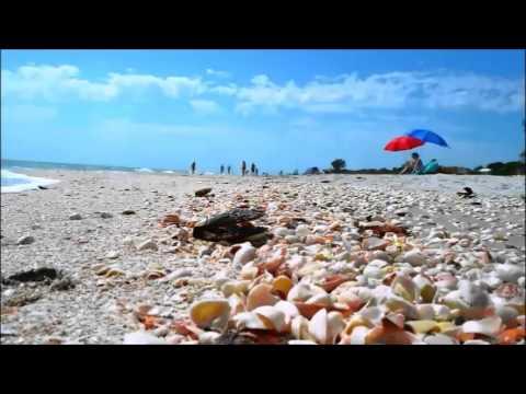 Beaches Of The Gulf Coast