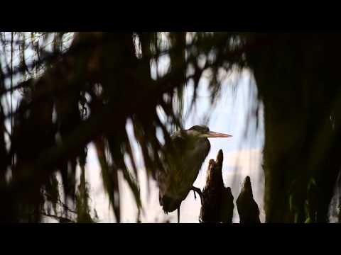 Fly On Blue Herons