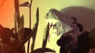 Pekka Dinosaurin joulutervehdys