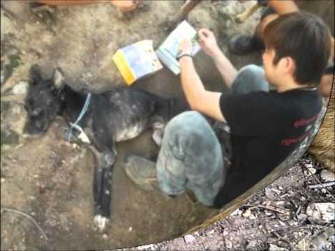 Illegaler Hundefleischtransport In Thailand 3000