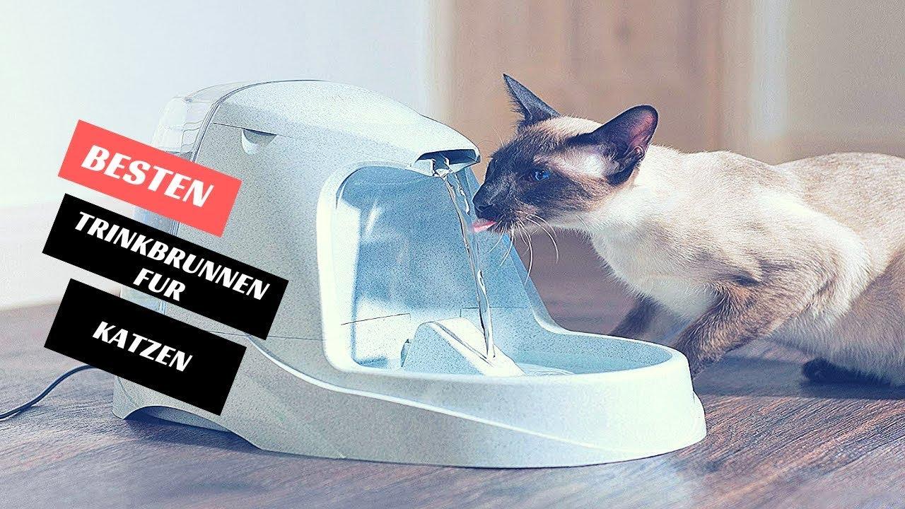 Katzen Trinkbrunnen Test