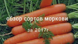 Обзор сортов моркови 2017г.