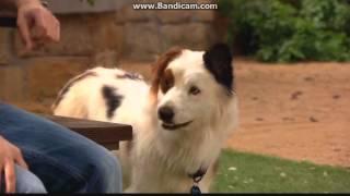 Прикол из собака точка ком #2