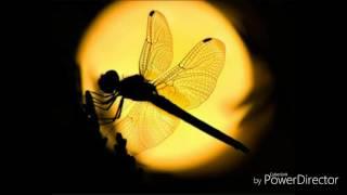 แมงปอ หลงลม - ลานนา คัมมิ้นส์