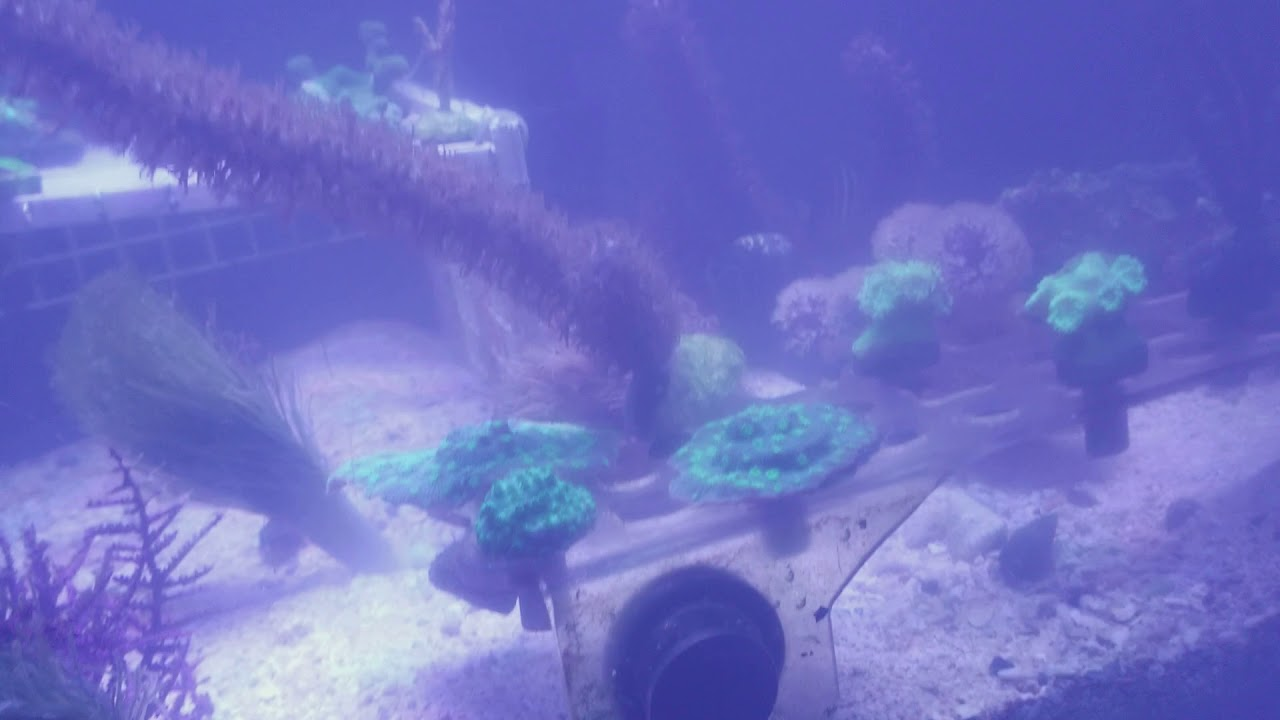 Never shake oyster feast reef tank pollution lesson reef tank ...