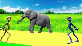 учить животных для малышей - животные для детей - видео развивающее #35