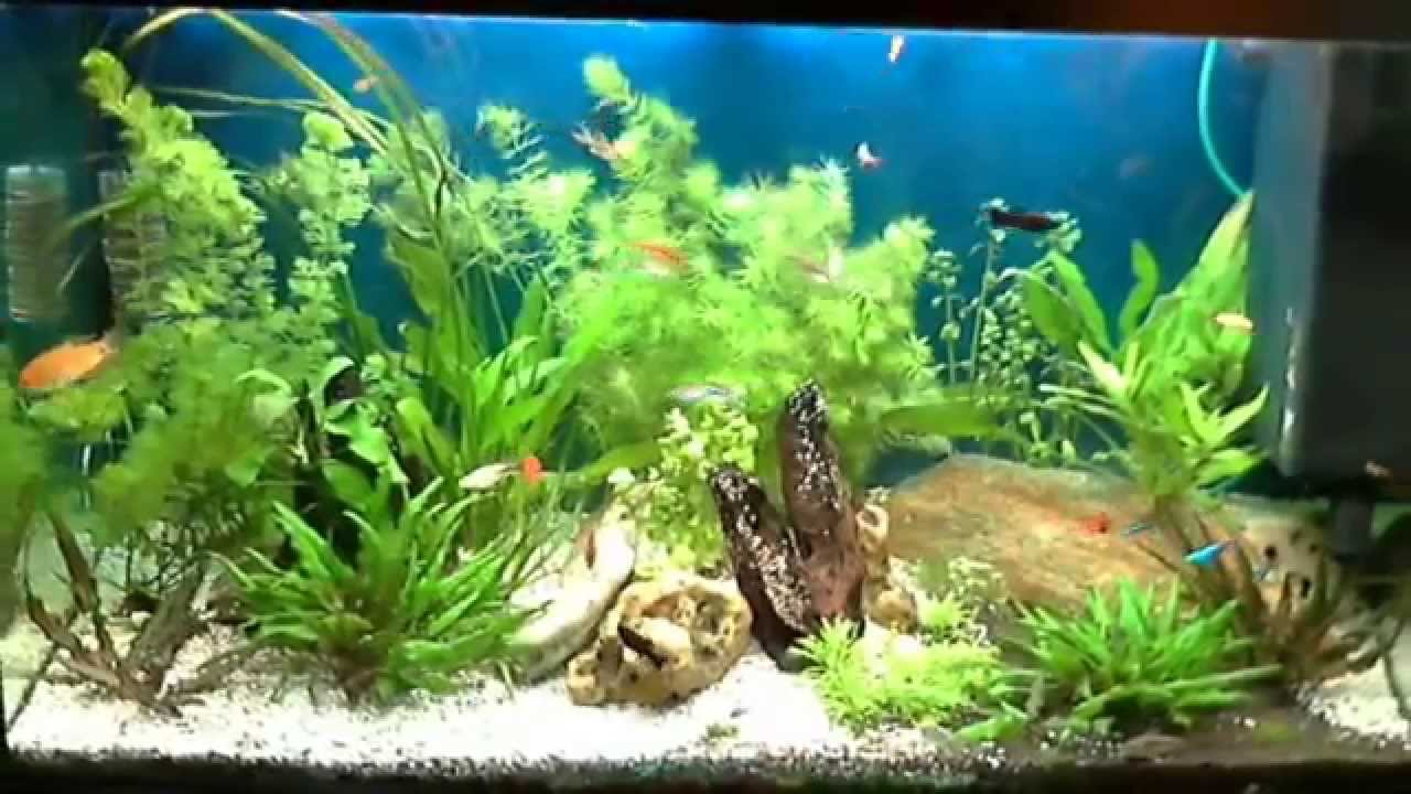aquarium de 180 litres youtube. Black Bedroom Furniture Sets. Home Design Ideas