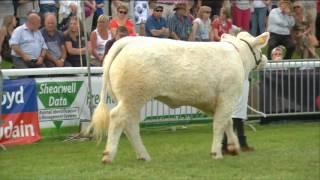 Pencampwriaeth y Gwartheg Biff - Rhan 1| Beef Cattle Championship - Part 1