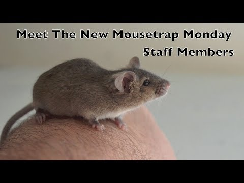 Meet The New Mouse Trap Monday Staff Members / New Video Posting Schedule.