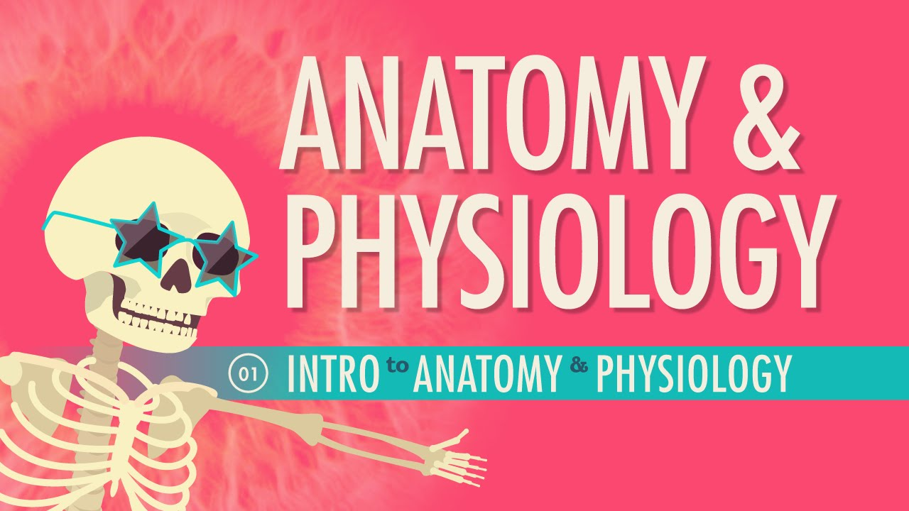 Introduction To Anatomy Physiology Crash Course Ap 1 Youtube