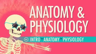 Introduction to Anatomy & Physiology: Crash Course A&P #1