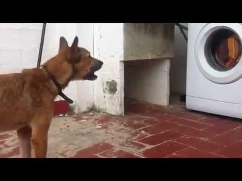chien qui aboie mp3