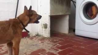 chien qui aboie apres une machine a laver