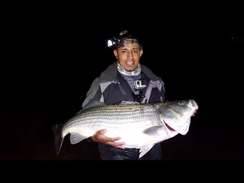 """39"""" AND  45"""" TROPHY STRIPERS! SURF FISHING"""