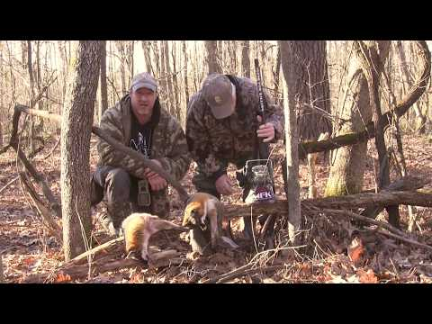 Gray Fox Hunting In The Afternoon  MFK S8:E6