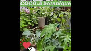 청주꽃집 코코아화원 몬스테라화분 반려식물 키우기 개업화…