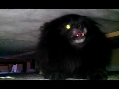 Evil Pomeranian Youtube