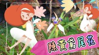 Publication Date: 2021-05-28   Video Title: Ms. Wai Wai陳黃鳶尾花