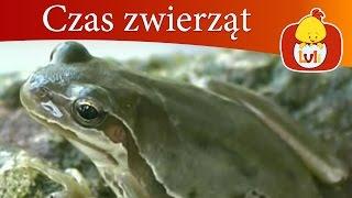 Czas zwierząt - Szop + Żaba, dla dzieci Luli TV - Videos for babies