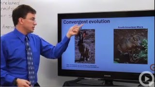 Convergent Evolution - Learn biology from a real expert