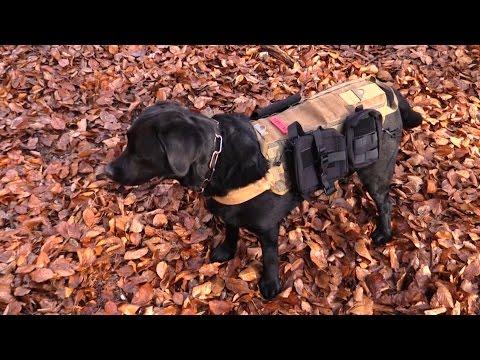 survival-rucksack-for-your-dog-(onetigris)