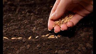 Cómo plantar semillas - Bricomania