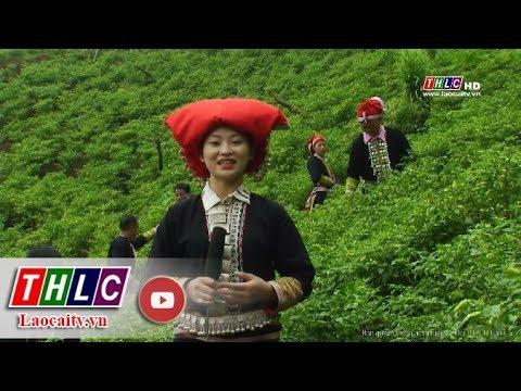 Truyền hình thực tế tiếng Dao (9/9/2018) | THLC