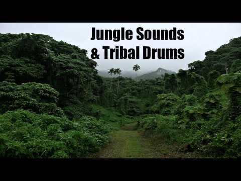 Jungle Sounds & Tribal Drums - Sleep - Relax - Chill - Meditate