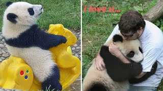 🐼 Funny And Cute Panda Compilation 🐼  - Adorable Pets Video (2020)