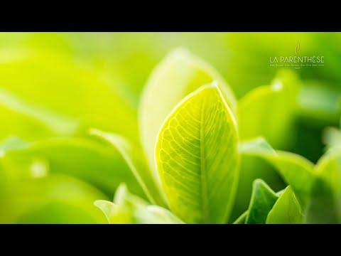 Respiration relaxante<br>par Patricia Vazzone<br>Durée : 9 minutes.
