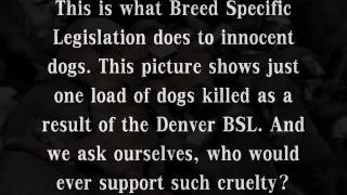 Pit Bulls  Bsl  101  By Kidwells Productions.wmv