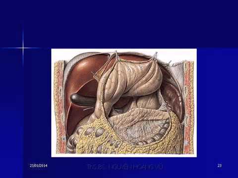 8    Giải phẫu học  Dạ dày