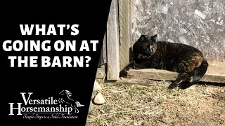 🔴 WHAT'S BEEN GOING ON AT THE BARN (live-stream) // Versatile Horsemanship