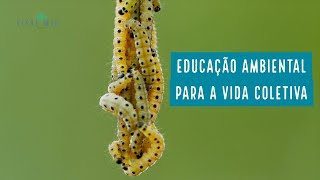 Educação ambiental para a vida coletiva