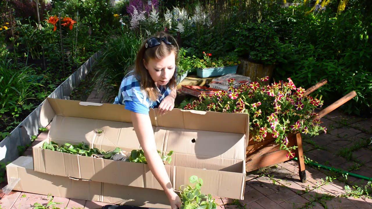 Гарденвуд: обзор посылки. Что я заказала для сада и огорода! Саженцы клубники!