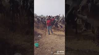 18+ Funny Memes || Bull Sex Funny Video || 2019 Collection