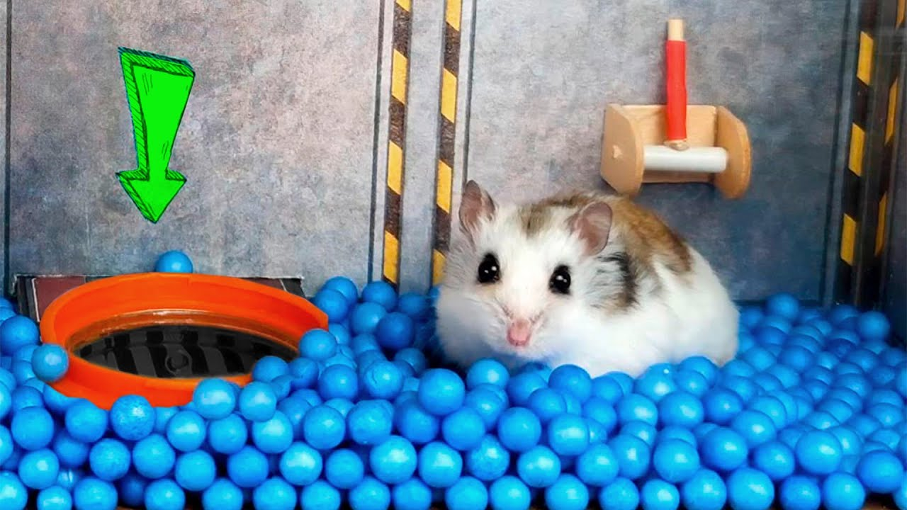 🐹 Hamster stories in the creative spaceship maze. My cute Mister Hamster