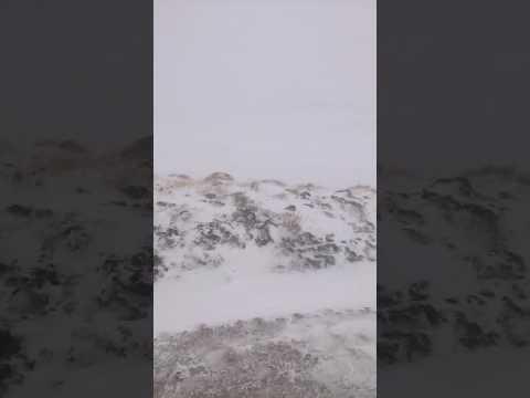 Winter Surveying Scotland 2017
